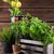 jardinagem · diferente · plantas · jardim · ferramentas - foto stock © brebca