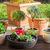 flower pots with herbs and flowers stock photo © brebca