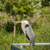 Great Blue Heron Perched on Metal Handrail stock photo © brianguest