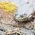 vergadering · moeras · wachten · buit · kikker · dier - stockfoto © brm1949
