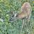 鹿 · バック · ベルベット · 立って · 森 · 森林 - ストックフォト © brm1949