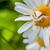 bloem · moordenaar · bug · wachten · buit · klein - stockfoto © brm1949