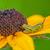 nero · bug · isolato · bianco · morte · macro - foto d'archivio © brm1949