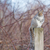gray squirrel perched stock photo © brm1949