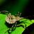 merénylő · rovar · zöld · növény · levél · rovar - stock fotó © brm1949