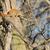 kırmızı · sincap · ağaç · ayarlamak · park - stok fotoğraf © brm1949