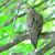 rouw · duif · natuur · vogel · dier · duif - stockfoto © brm1949