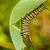 tırtıl · makro · atış · kelebek · ayarlamak · başlatmak - stok fotoğraf © brm1949