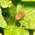 spin · groen · blad · blad · groene · macro · shot - stockfoto © brm1949