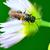vespa · piccolo · fiore · africa - foto d'archivio © brm1949