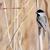 doğa · kuş · hayvan · orman · açık · havada · yaban · hayatı - stok fotoğraf © brm1949