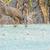 鹿 · バック · 夏 · ベルベット · 立って · フィールド - ストックフォト © brm1949