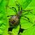 assassino · bicho · planta · folha · inseto · ao · ar · livre - foto stock © brm1949