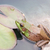 сидят · болото · воды · лягушка · животного - Сток-фото © brm1949