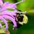 çiçek · arı · görüntü · güzel · mor · doğa - stok fotoğraf © brm1949