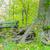 公園 · ベンチ · ツリー · 豊かな · いかがわしい · 夏 - ストックフォト © brm1949