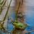 сидят · мелкий · воды · болото - Сток-фото © brm1949