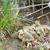 Canadá · ganso · sessão · água · grama · pássaro - foto stock © brm1949