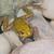 rock · vergadering · moeras · kikker · dier - stockfoto © brm1949