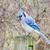 синий · забор - Сток-фото © brm1949