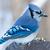 синий · природы · птица · Перу · животного - Сток-фото © brm1949