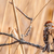ağaç · serçe · kırmızı - stok fotoğraf © brm1949