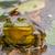 vergadering · kikker · dier · buitenshuis · wildlife - stockfoto © brm1949