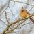 női · fából · készült · kerítés · madár - stock fotó © brm1949