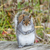gray squirrel standing stock photo © brm1949
