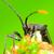 black stink bug stock photo © brm1949