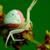 granchio · spider · seduta · fiore · rosso · bianco - foto d'archivio © brm1949
