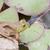 bullfrog on a rock stock photo © brm1949