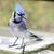 синий · древесины · пост · природы · птица · животного - Сток-фото © brm1949