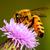 Sammeln · Honig · Biene · rosa · Blume · Schönheit - stock foto © brm1949