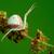 krab · spin · macro · wachten · buit - stockfoto © brm1949