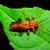 жук · насекомое · белый · макроса · коричневый - Сток-фото © brm1949
