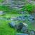bank · water · natuur · zee · groene · ontspannen - stockfoto © brm1949