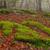 осень · падение · красоту - Сток-фото © broker