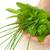 mulher · folha · mãos · natureza - foto stock © brozova