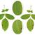 isolé · noix · arbre · blanche · bois · vert - photo stock © brozova