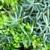 succulente · crescita · impianti · verde · bianco · legno - foto d'archivio © brozova