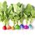 creative conception of fresh coloured radish stock photo © brulove