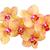 turuncu · orkide · şube · taze · çiçekler · pot - stok fotoğraf © brulove