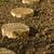 huş · ağacı · ahşap · arka · plan · çerçeve - stok fotoğraf © brulove