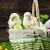 ingericht · kip · eieren · gras · kinderen · witte - stockfoto © brunoweltmann