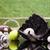 スポーツ · アイコン · ハンドボール · 孤立した · ミラー · 平面 - ストックフォト © brunoweltmann