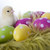 young chicken and easter eggs on soft background stock photo © brunoweltmann