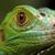 Green Lizard stock photo © BrunoWeltmann