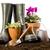 bloemen · tuin · tools · hemel · bloem · gras - stockfoto © BrunoWeltmann