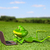 frog with a laptop on the grass stock photo © brux